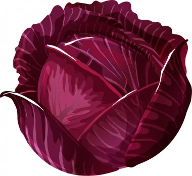 Red Cabbage.