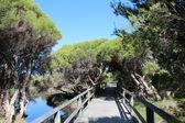 dřevěný chodník nad jezerem v bunbury