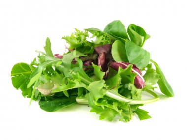 Salad mix with rucola, frisee, radicchio and lamb's lettuce. Isolated on white background. stock vector