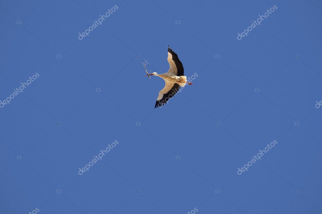 cegonha voando com filial fotografias de stock abbphoto 27918843