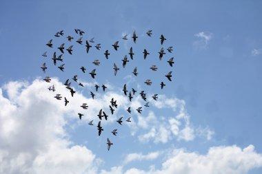 Heart shaped flock of birds