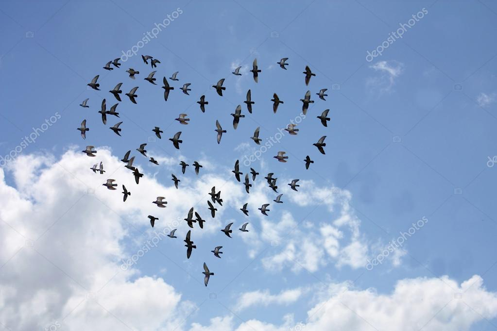 Heart shaped flock of birds