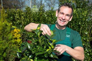 Gardener pruning a tree or plant in nursery stock vector