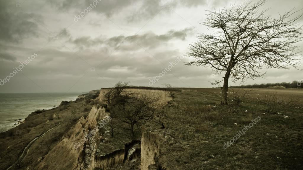 Alone old tree at sea coast
