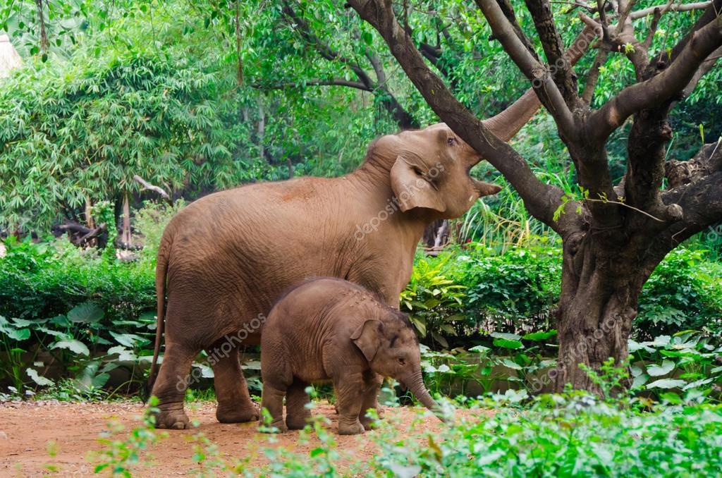 Fotos grandes del elefante elefante grande madre y beb - Fotos de elefantes bebes ...