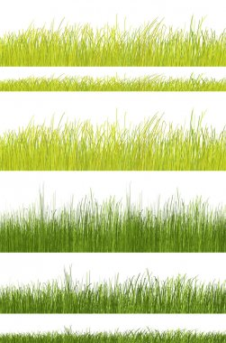Green grass pattern of natural color on white background stock vector