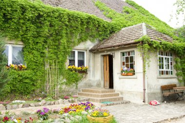 House overgrown with vines of flowers in front