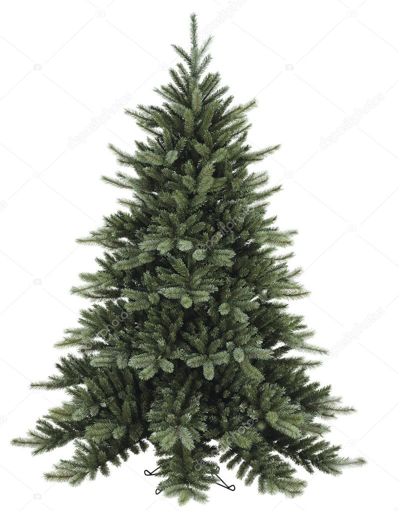 Fir tree on white background