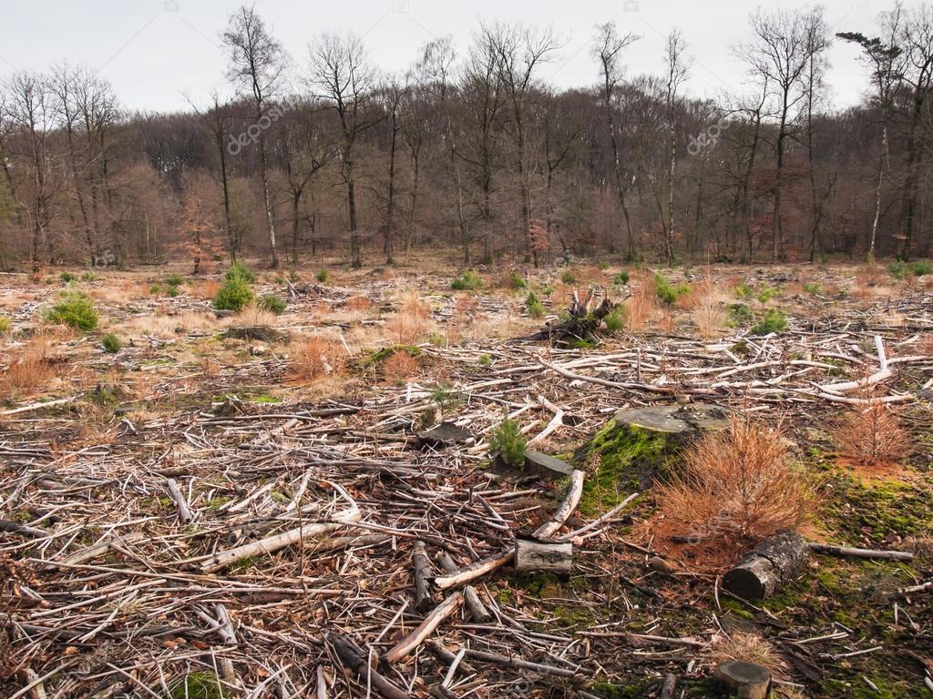 Resultado de imagen para bosques talados