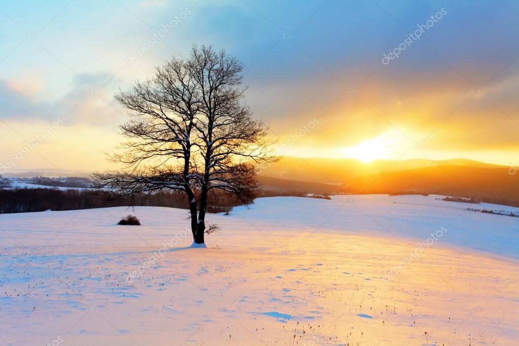 Paesaggio invernale in natura neve con sole e albero for Disegni paesaggio invernale