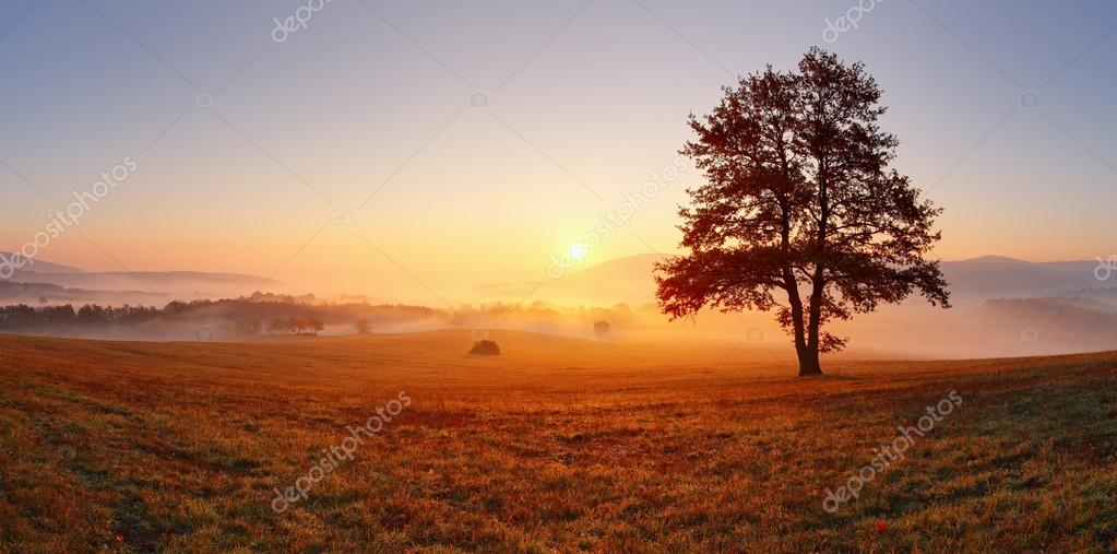 Фотообои Alone tree on meadow at sunset with sun and mist - panorama