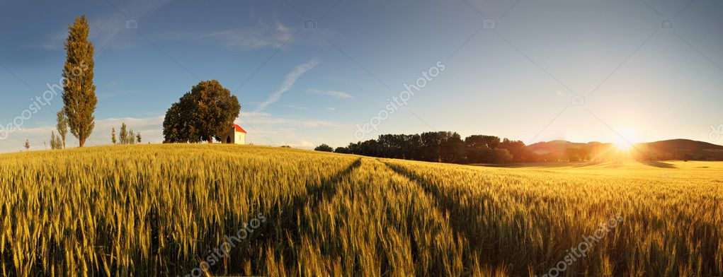 Фотообои Sunset over wheat field with path and chapel in Slovakia - panor