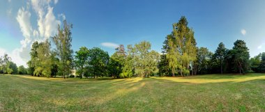 360 degree forest panorama
