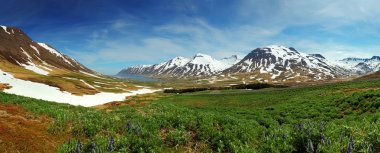 Iceland mountain panorama with flowers