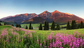 Photo Beauty mountain panorama with flowers - Slovakia