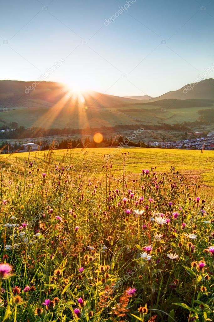 Sunset on flower field - Slovakia Tatra