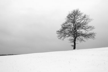 Tree iin meadow at winter