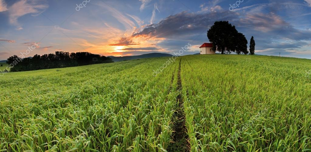 Farm field with lone tree and chapel
