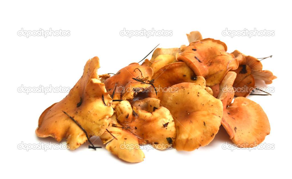 Картинка лисичка гриб бегает за мышкой от компьютера