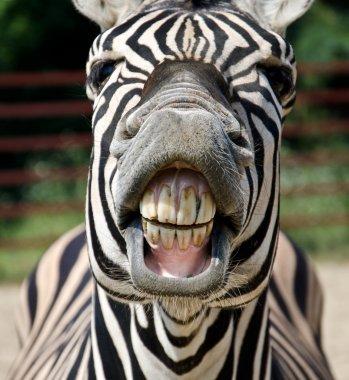 Zebra smile and teeth stock vector