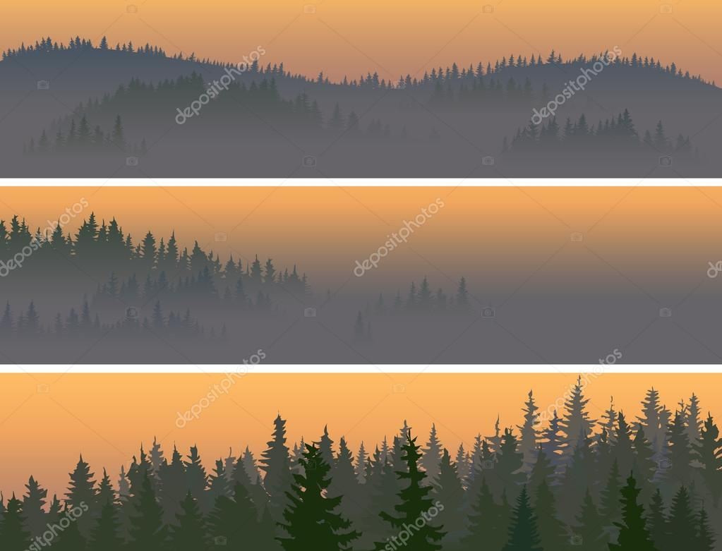 Horizontal banners of misty coniferous wood.