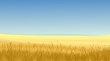 Vector horizontal illustration: field of yellow cereals grass against clear blue sky in hot day. stock vector