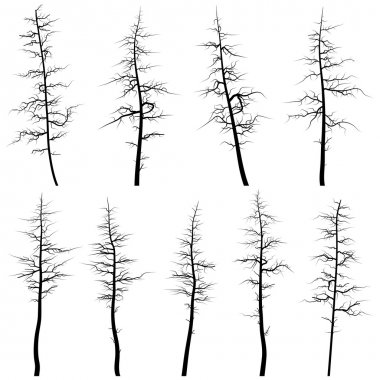 Set of vector silhouettes of coniferous old trees without leaves (deadwood). clip art vector