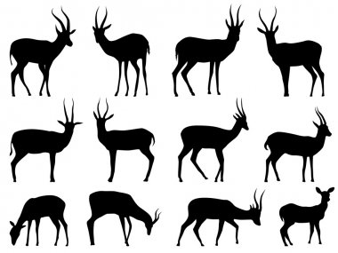 Set vector silhouettes of antelopes.