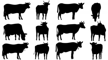 Set silhouettes of cows and bulls