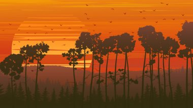 Wild coniferous wood at sunset.