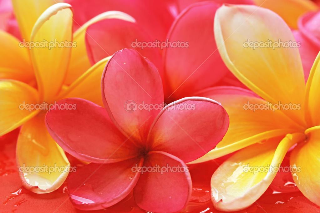 Bali flower