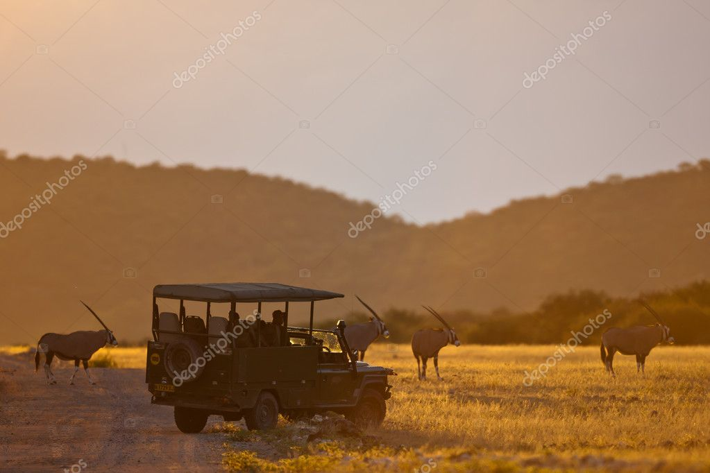 Gemsbok antelopes, safari, Namibia