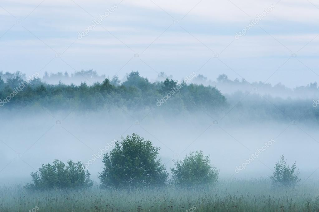fog over russian field