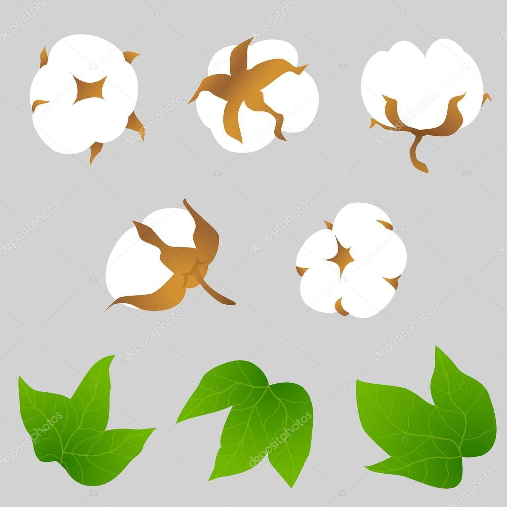 Set of cotton plant elements