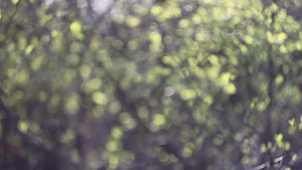 abstraktní příroda rozmazané pozadí stromů