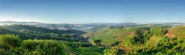 Tea plantations Puer