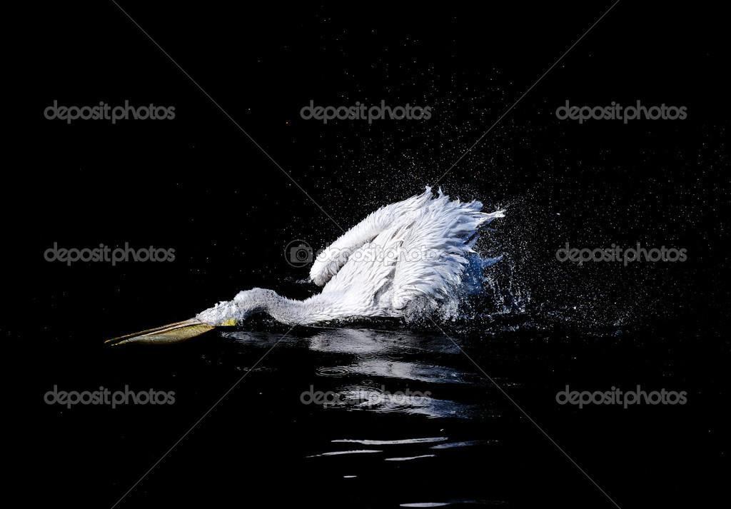Μεγάλο πουλί κινητό τηλέφωνο φωτογραφίες