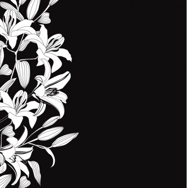 Black and white background with white flowers lily. Elegant floral vector border