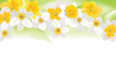 Flower background. Spring floral border. Daffodil vector garland.