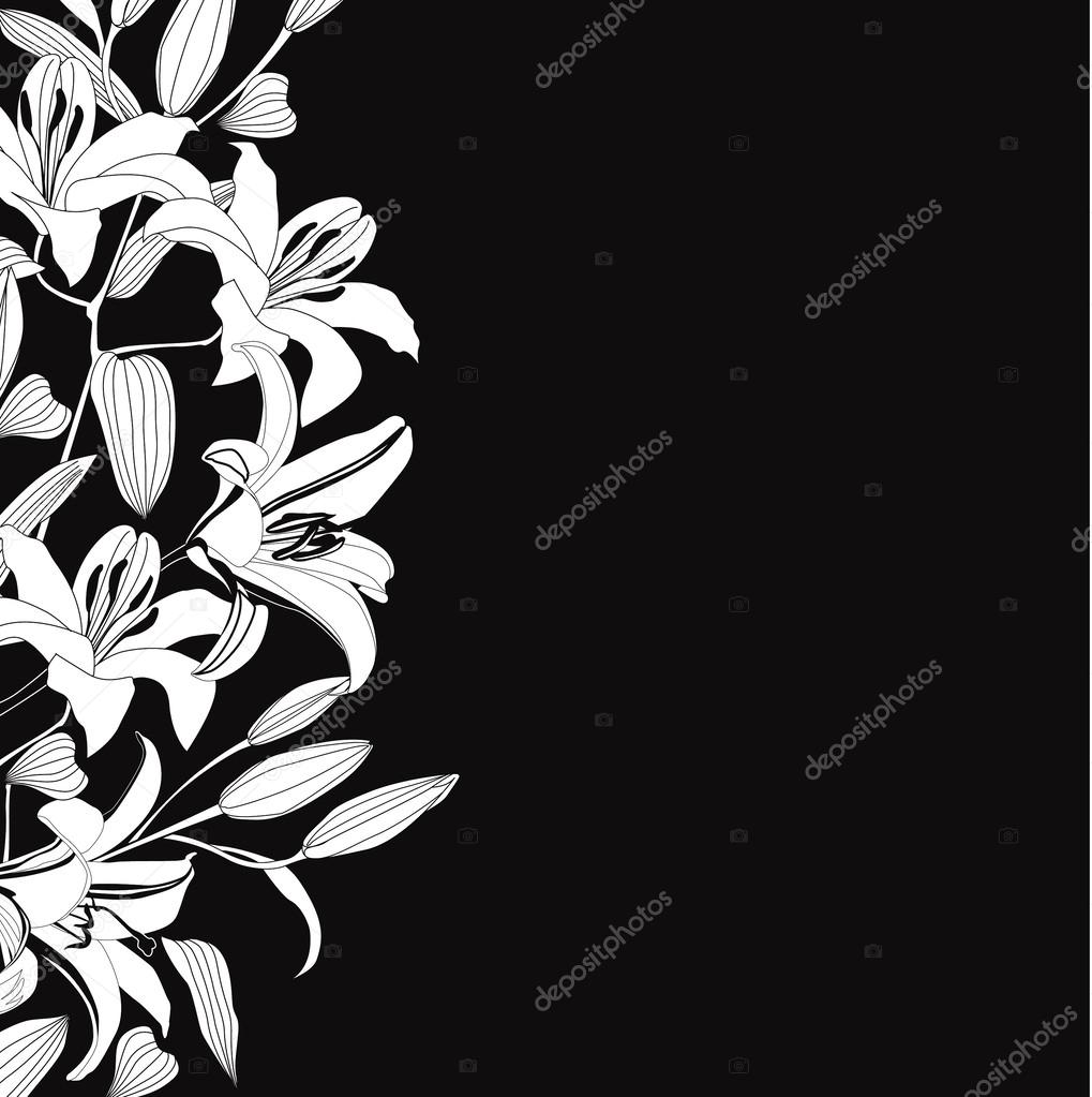 Black And White Background With White Flowers Lily Elegant Floral