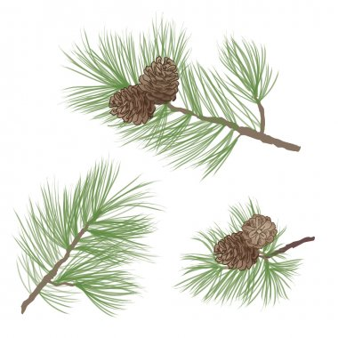 Pine tree branch seamless background. forest seamless pattern. Pine cone Collection.