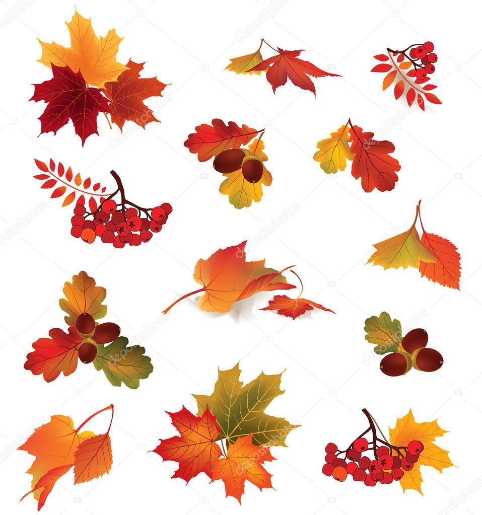 Autumn Icon Set Fall Leaves And Berries Stock Vector C Yokodesign 30041809