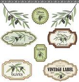 Fotografia set di etichette di ulivi depoca