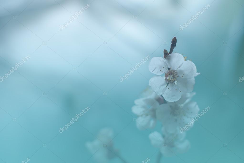 Toned Spring blossom