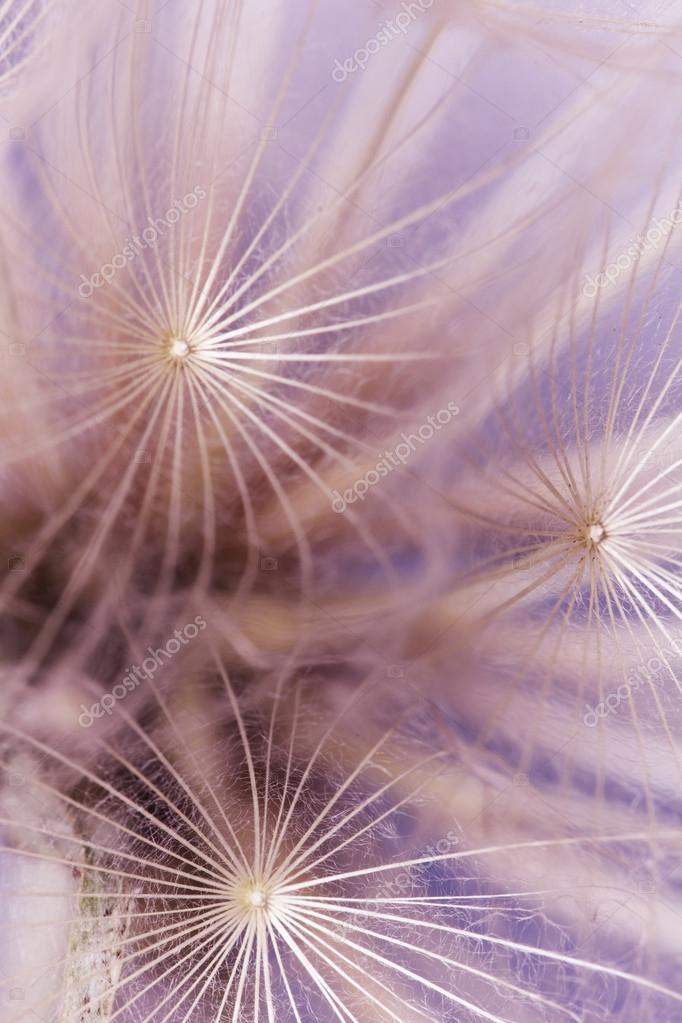 Abstract colorful dandelion seeds