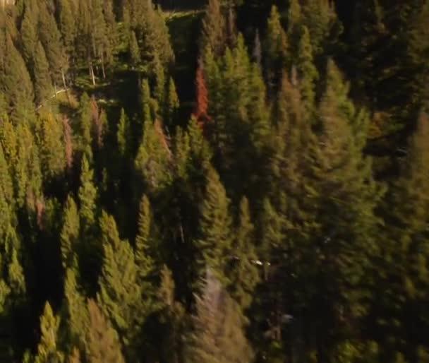 Letecký snímek lesa a stráně