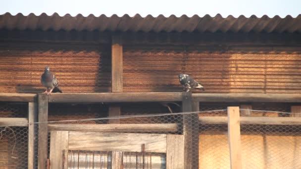 holubi sedět pod vlnité střešní krytiny