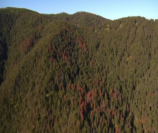 Letecký snímek lesů a hor s mrtvé stromy