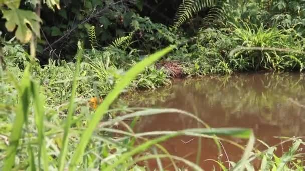 fogliame e stagno giungla africana