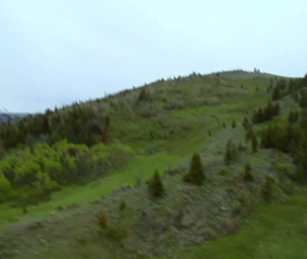 svěží travnaté kopce s borovice